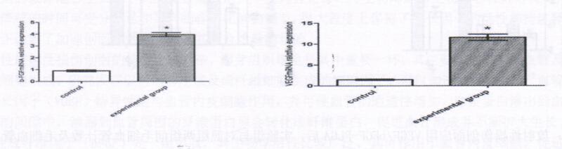 图1:放射性损伤创面应用VEGF/bFGF-PLGA15天后与对照组两组间VEGFmRNA、bFGFmRNA表达的比较