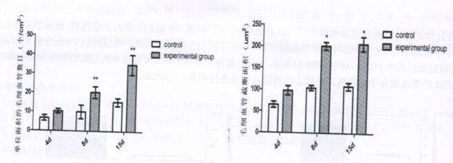 图2:放射性损伤创面应用VEGF/bFGF-PLGA后,实验组与对照组两组间毛细血管计数及毛细血管横截面积的比较
