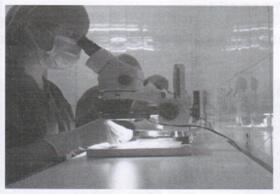图8 在显微镜下制备FUG