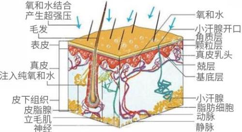 锦州博美雅水氧活肤 美白滋润 祛黄亮肤 改善肤质 深层高效补水