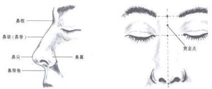 鼻部面诊主要是看哪些方面